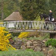 Das Reiten über die Brücke haben die Pferde super mitgemacht, obwohl einige am Anfang doch etwas skeptisch waren.
