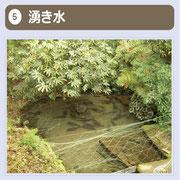 よく見ると、湧き出す水の様子が見えます。魚も泳ぐ美しい湧水です。