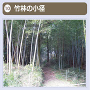 竹林の中に苔むした道があり、ほこらがあります。