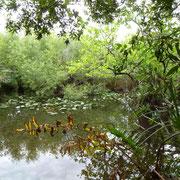Die Wanderwege in den Everglades sind wirklich wunderschön....