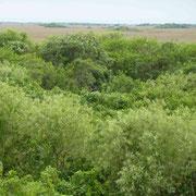 Aussicht hat man hier nur von einen Aussichtsturm... Die ganzen Everglades haben einen Höhenunterschied von weniger als 5 Metern...