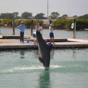 und Delfinen...