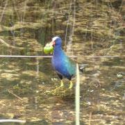 und dier Vogel hier soll auch wirklich ganz ganz selten sein...