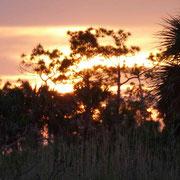Unser zweiter Abend in Ochopee im Everglades Nationalpark