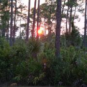 Sonnenuntergang in den Everglades...