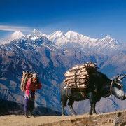Trasporto sull'Himalaya