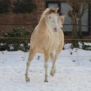 Winter 2011 in den Niederlanden, ein Jahr alt
