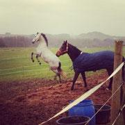 Demeter hat Spaß auf der Weide