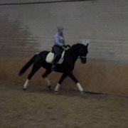 Leider etwas unscharf, aber die Qualität des Pferdes in zu erkennen. Januar 2014