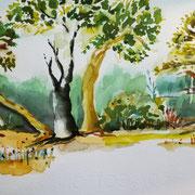 19.06.20 Le Paradou Provence - Bäume an einem Fussweg