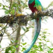 Quetzal by WG