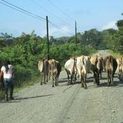 Strassenszene nahe Tortuguero by WG
