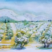 16.06.20 Olivenhain der der Nähe von  Mouriès