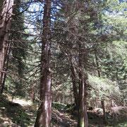 Sentiero Grandi Alberi