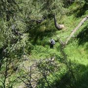 Sul sentiero che conduce all'Alpe di Devré