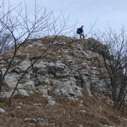 Monte Spelucco