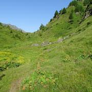 Salita all'Alpe Foppa di Rèdich