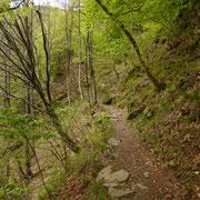 Sentiero che dal km 9 (sulla strada Vira Gambarogno - Indemini) conduce all'Alpe di Neggia