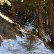 Neve sul sentiero ............