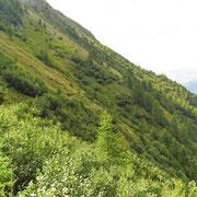 Il bel sentiero che taglia la montagna a Sgonfiò