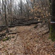 Diversi alberi caduti sul percorso ..........