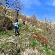 Dalla Forcola d'Arasio scendiamo all'Alpe Tramboschino