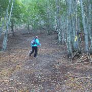 Nel bosco vicino all'Alpe delle Tagliade