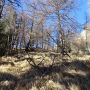 Ripida salita per l'Alp d'Arbeola