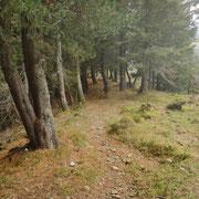Nel bosco tra Giggione e Giggio