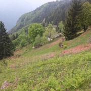 Monti di Saurù 1328 m