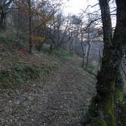 Sentiero per l'Alpe del Cuscio