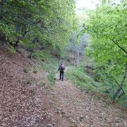 Sentiero per l'Alpe Bolla