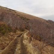 Sentiero per l'Alpe Cardada