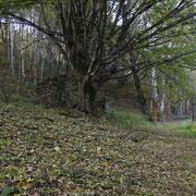 Sentiero per Cimadera
