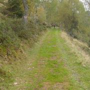 Sul sentiero ....