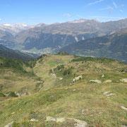 Alpe vicino al Rifugio Garzonera