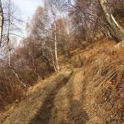 Sentiero per l'Alpe Vegnasca