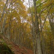 Il bosco inizia a colorarsi