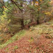 Il sentiero entra nel bosco