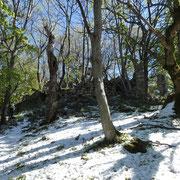 Monti Corno 1100 m