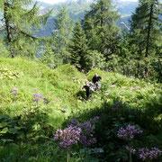 Sentiero sotto il Sasso della Preda invaso dalla vegetazione