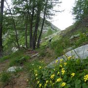 Verso l'Alpe Pesced
