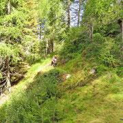 Sentiero Motto - Brogoldone