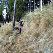 Sentiero per l'Alpe d'Urno