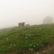 Alpe Nisciora 1445 m