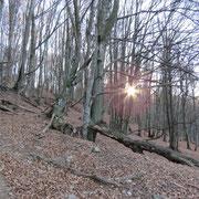 Bellissimo bosco sotto l'Alpe Cottino
