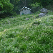 Alp di Besarden