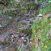 Sul sentiero per Durèda