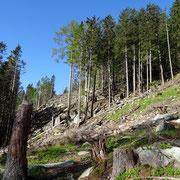 Sentiero per l'Alp de Martum