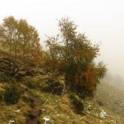 Deviamo per Piancabella - Alpe Nisciora
